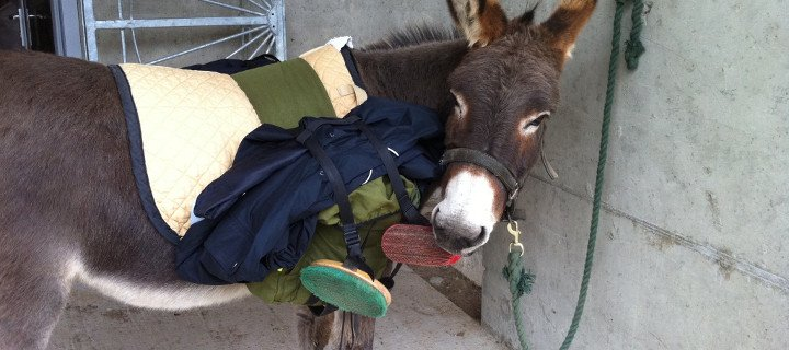 Clissmann-Donkey-Walking-FAQ-training