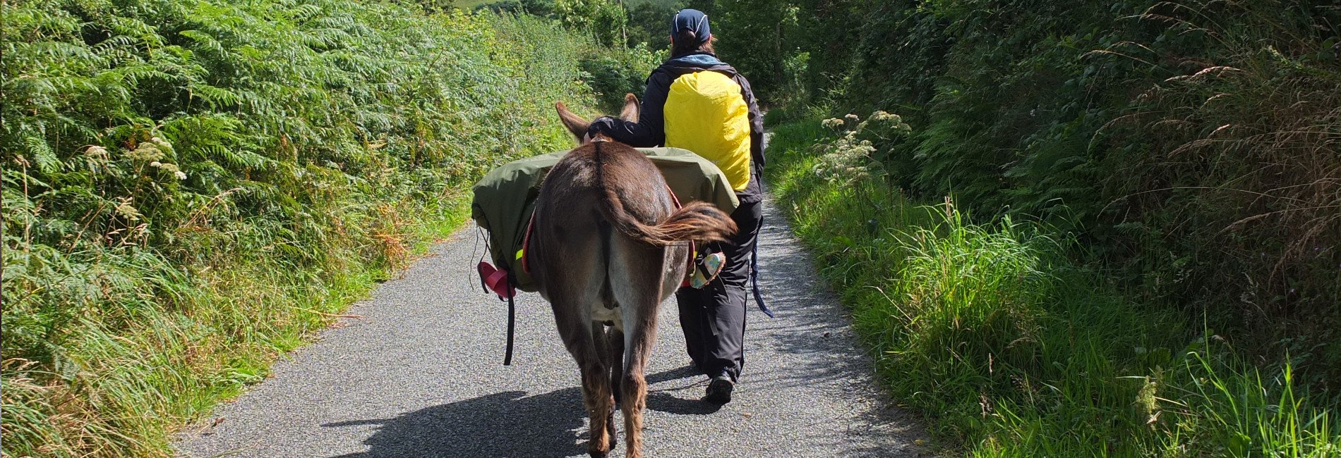 Donkey walks and donkey walking holidays in Ireland