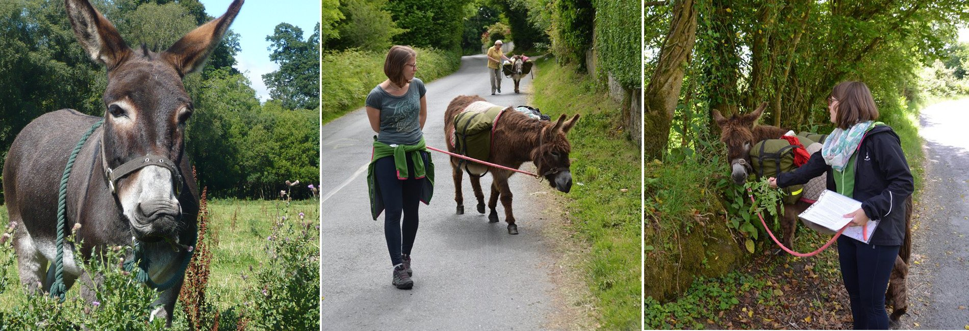 Donkey walks and donkey walking holidays