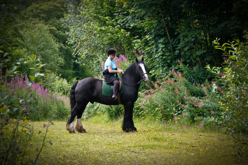 Horse Riding Activity Holiday in Wicklow
