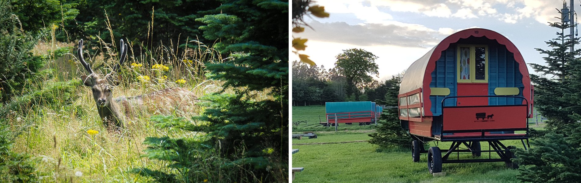 Wildlife and glamping in Wicklow Ireland