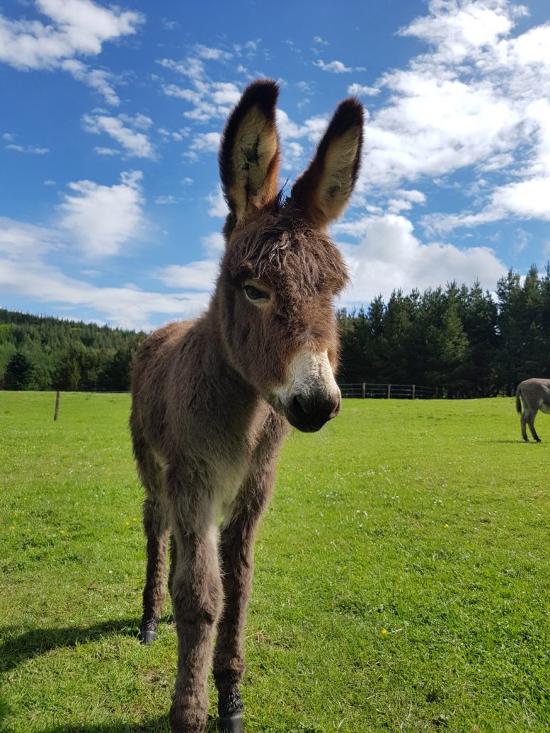Our animals in Clissmann Horse Caravans
