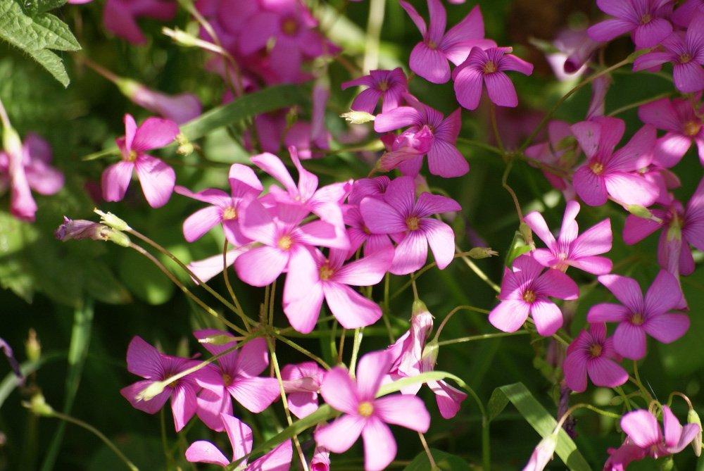 Irish flora and fauna in Wicklow