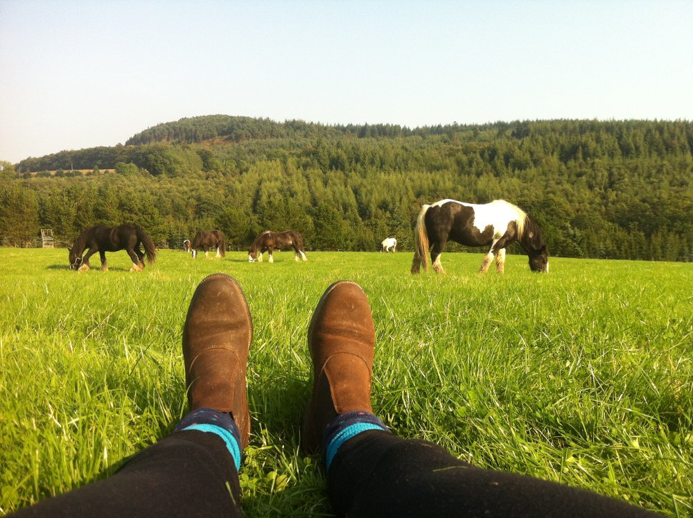 The view in Wicklow for glamping in horse caravans