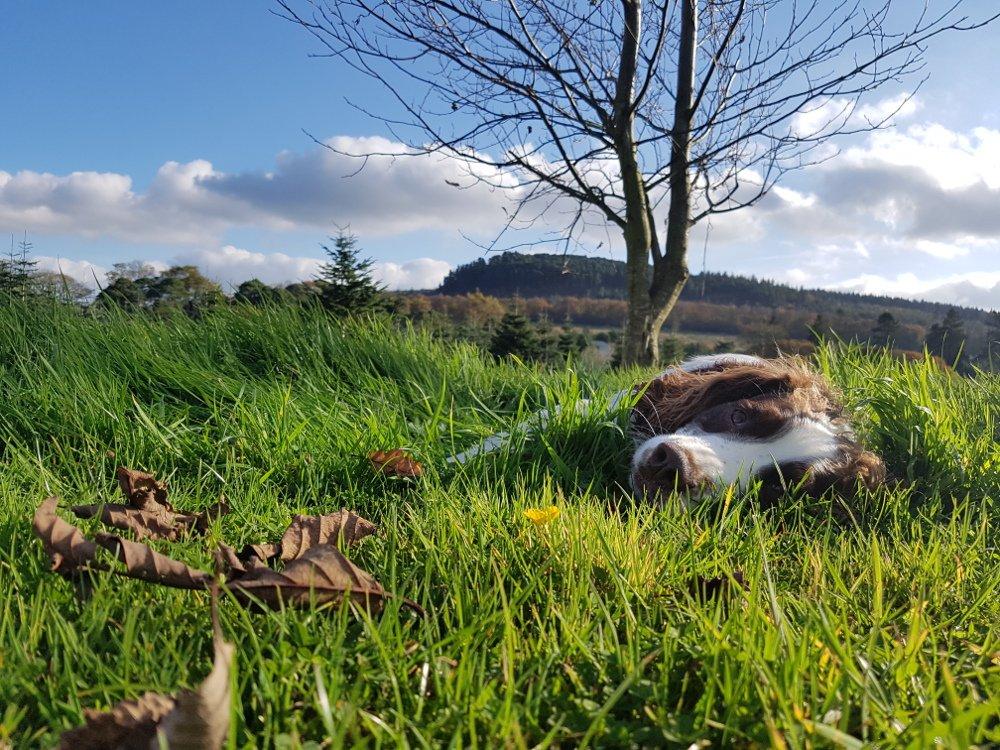 Dog walking in Wicklow Hills Clissmann Horse Caravans