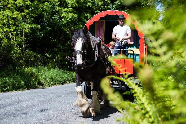 Horse caravan holiday in Wicklow