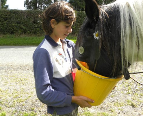 Feed the horses and donkeys on a family holiday in Ireland