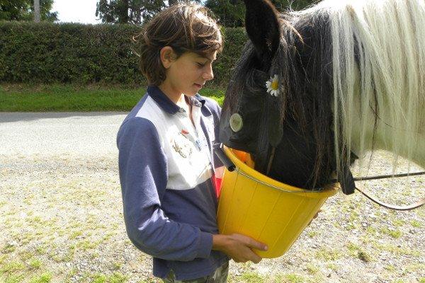 Feed the horses and donkeys on a family holiday in Ireland