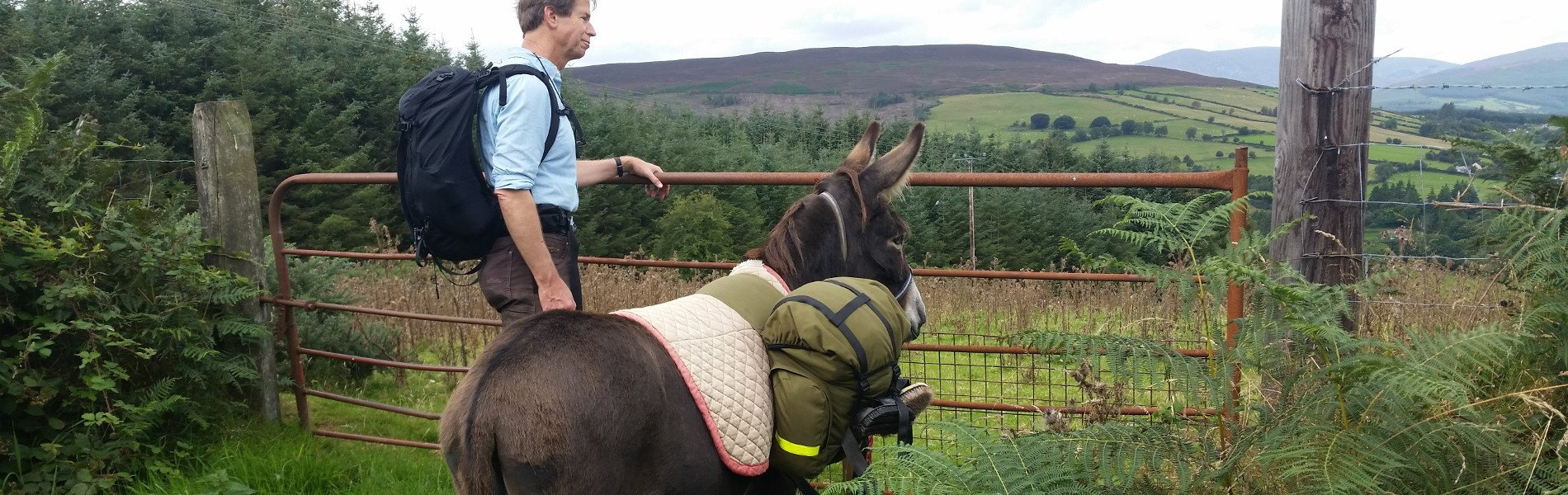 Donkey walking in Wicklow, alternative holidays